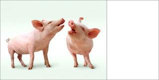 Jb_pigs-WEB